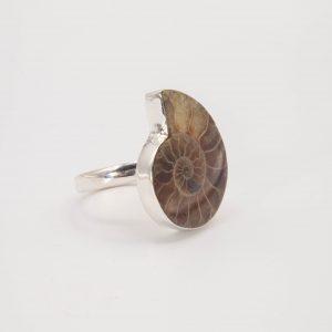 Fósil ammonita